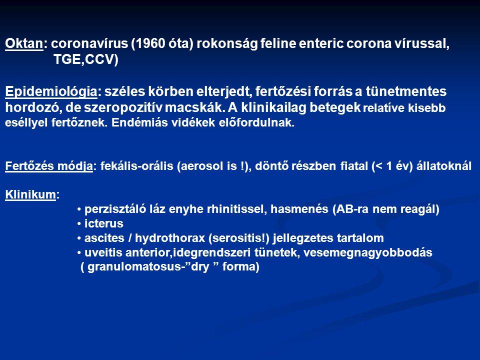 Oktan: coronavírus (1960 óta) rokonság feline enteric corona vírussal, TGE,CCV) Epidemiológia: széles körben elterjedt, fertőzési forrás a tünetmentes