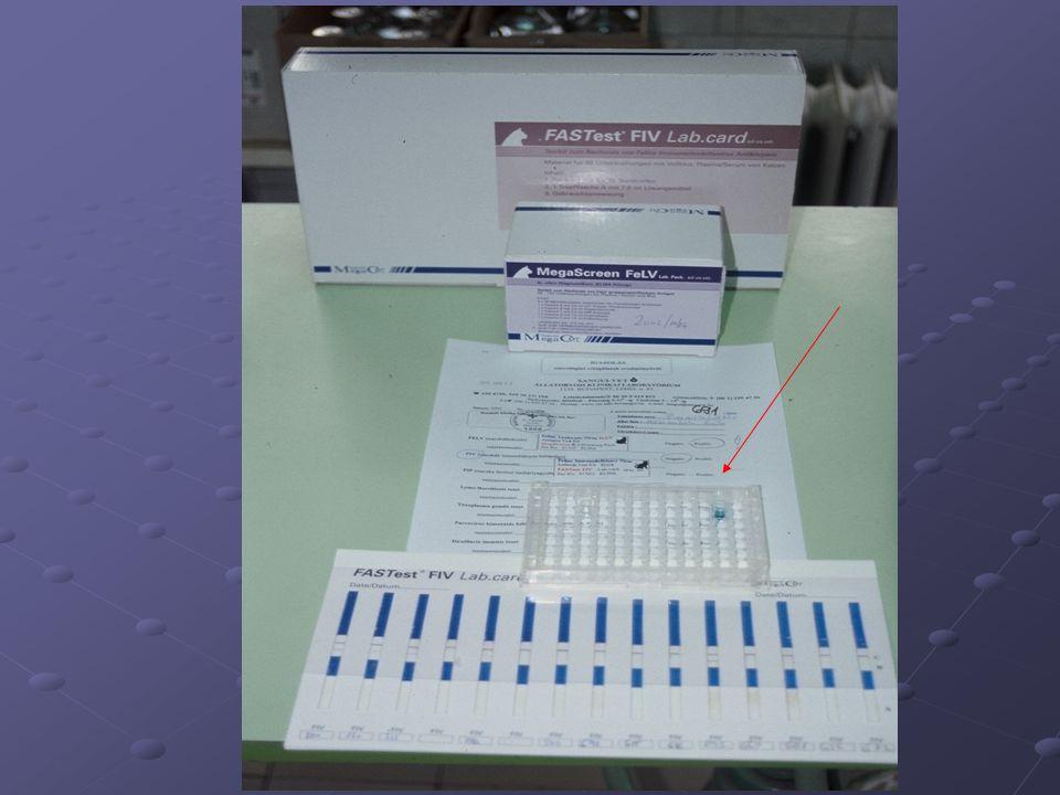 Macskaleukózis szerodiagnosztikája ELISA Indirekt IF vizsgálat PCR Mit mutathatunk ki .