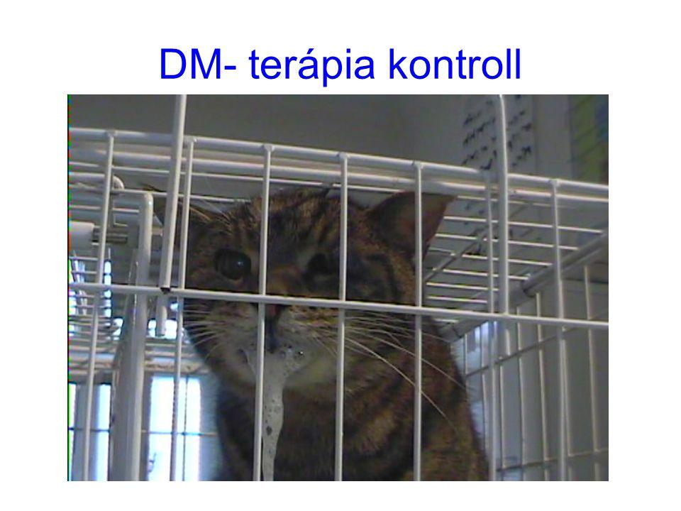 DM- terápia kontroll