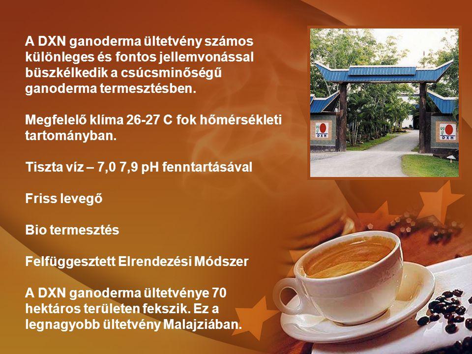 Vita Cafe Egy exkluzív 6 az 1-ben típusú ital ginszenggel, Tongkat Ali és ganoderma kivonattal.