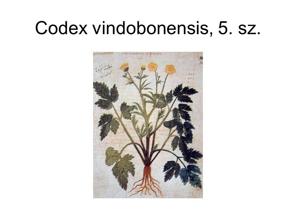 Codex vindobonensis, 5. sz.