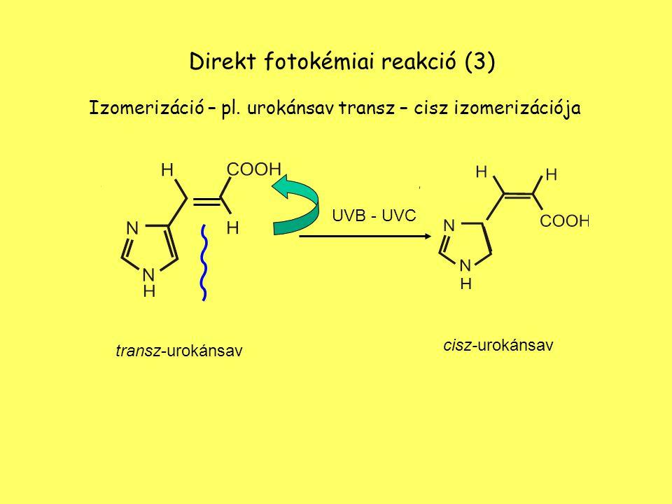 Direkt fotokémiai reakció (3) Izomerizáció – pl. urokánsav transz – cisz izomerizációja UVB - UVC transz-urokánsav cisz-urokánsav