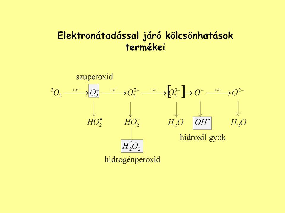 DNS relatív abszorpciója Ultraibolya fény mutagén hatása az E.