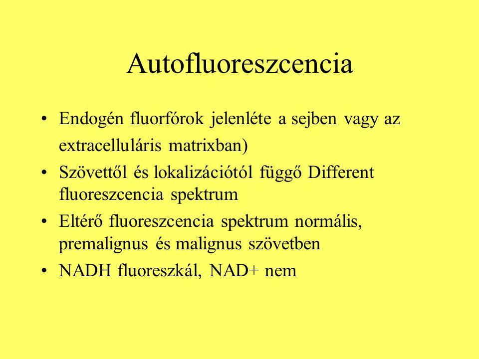Autofluoreszcencia Endogén fluorfórok jelenléte a sejben vagy az extracelluláris matrixban) Szövettől és lokalizációtól függő Different fluoreszcencia