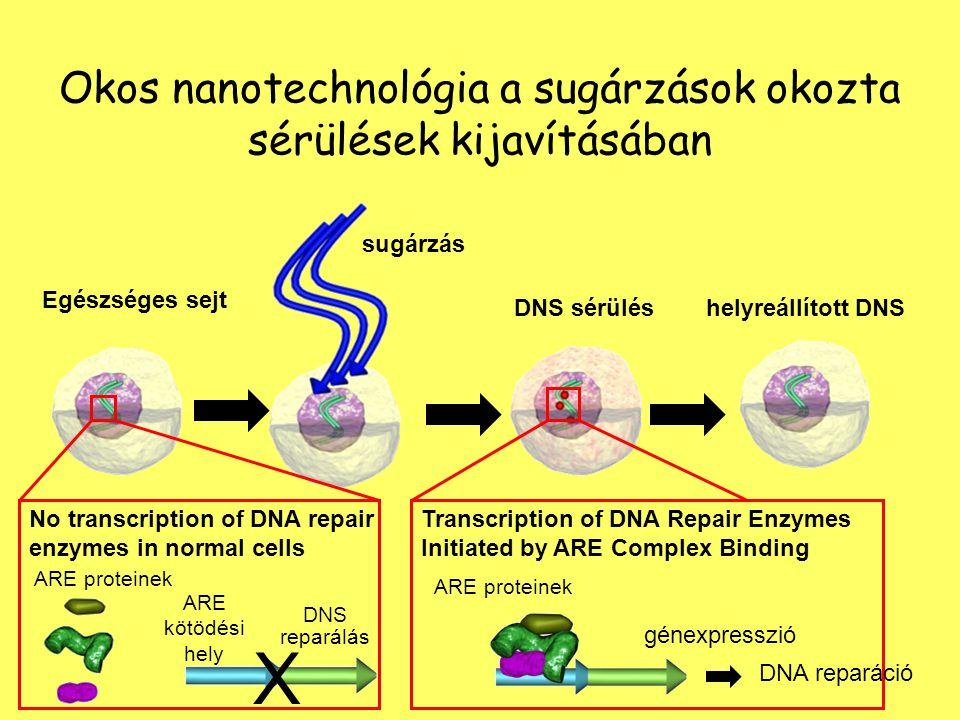 sugárzás Egészséges sejt DNS sérüléshelyreállított DNS Transcription of DNA Repair Enzymes Initiated by ARE Complex Binding DNA reparáció X No transcr
