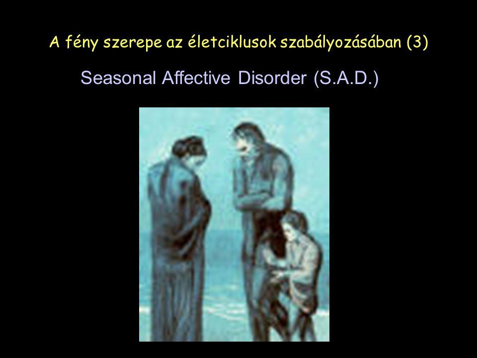 Seasonal Affective Disorder (S.A.D.) A fény szerepe az életciklusok szabályozásában (3)