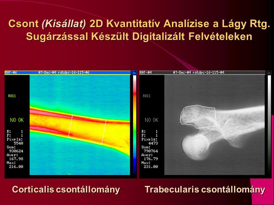 Csont (Kisállat) 2D Kvantitatív Analízise a Lágy Rtg. Sugárzással Készült Digitalizált Felvételeken Corticalis csontállomány Trabecularis csontállomán