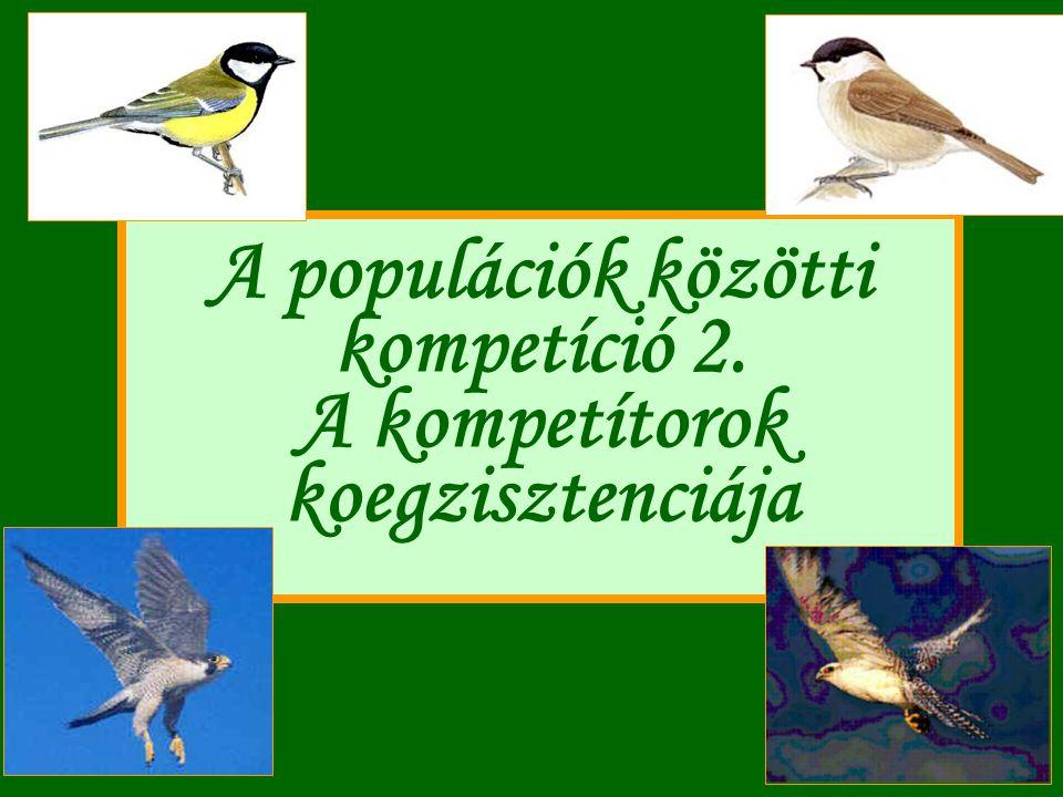 A populációk közötti kompetíció 2. A kompetítorok koegzisztenciája