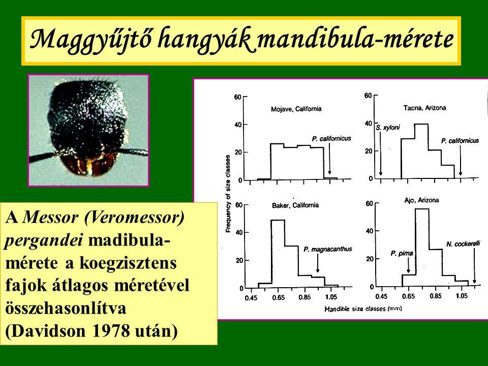 Maggyűjtő hangyák mandibula-mérete A Messor (Veromessor) pergandei madibula- mérete a koegzisztens fajok átlagos méretével összehasonlítva (Davidson 1
