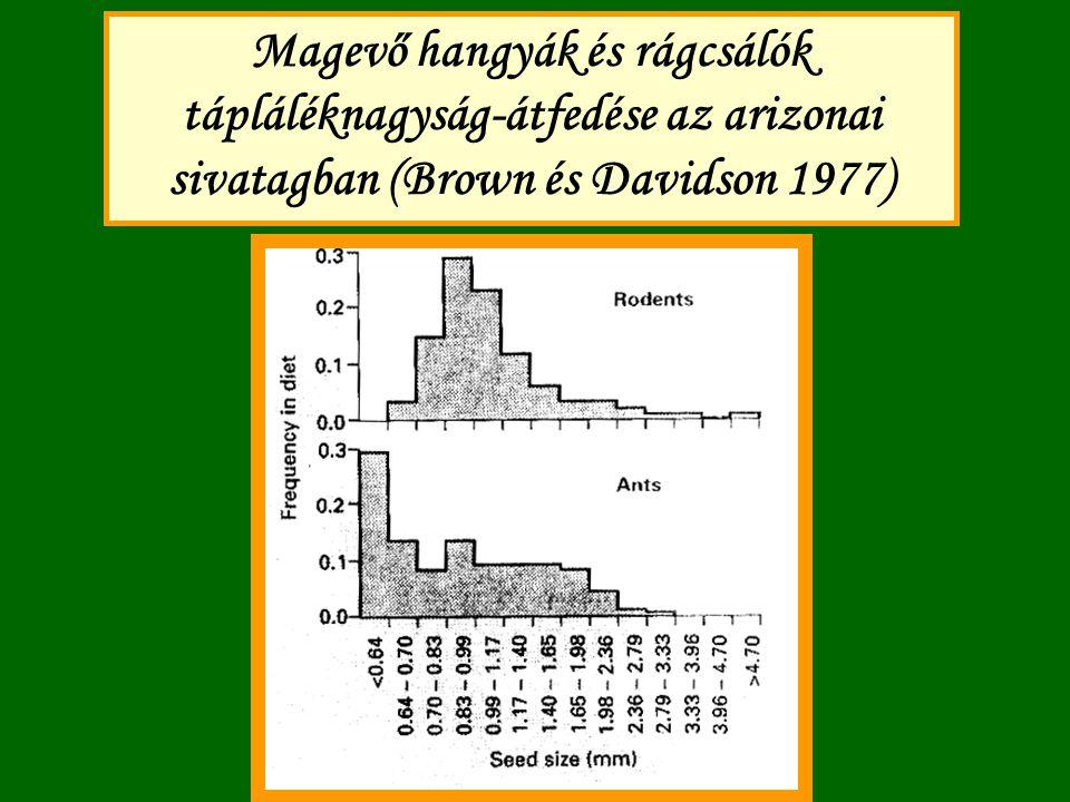 Magevő hangyák és rágcsálók tápláléknagyság-átfedése az arizonai sivatagban (Brown és Davidson 1977)