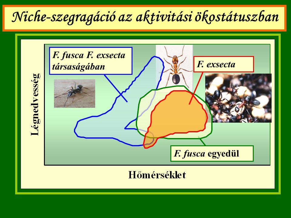 F. fusca egyedül F. exsecta F. fusca F. exsecta társaságában Niche-szegragáció az aktivitási ökostátuszban
