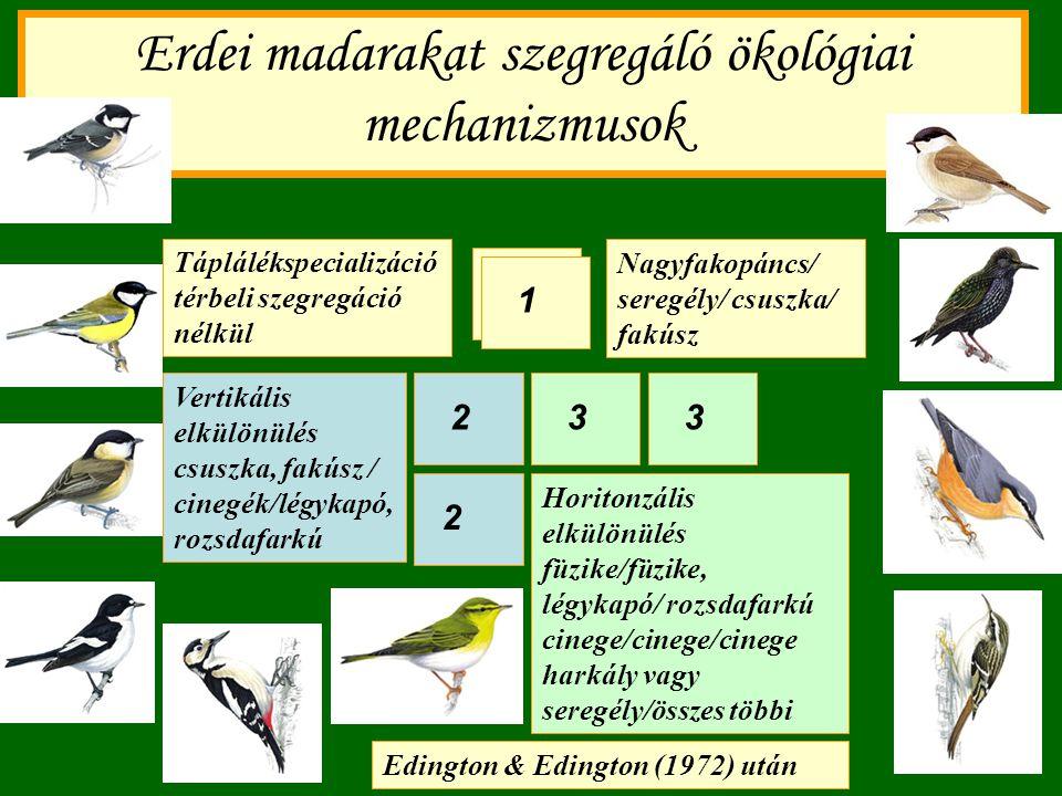 Erdei madarakat szegregáló ökológiai mechanizmusok Horitonzális elkülönülés füzike/füzike, légykapó/ rozsdafarkú cinege/cinege/cinege harkály vagy ser