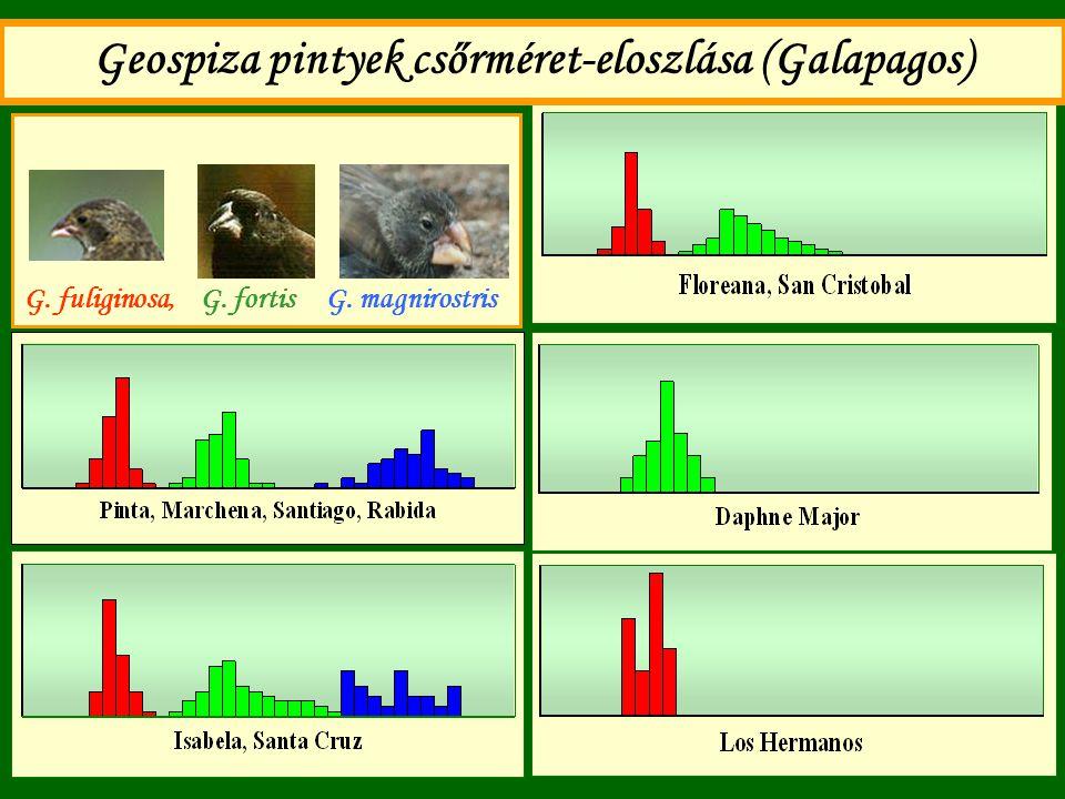 Geospiza pintyek csőrméret-eloszlása (Galapagos) G. fuliginosa, G. fortis G. magnirostris