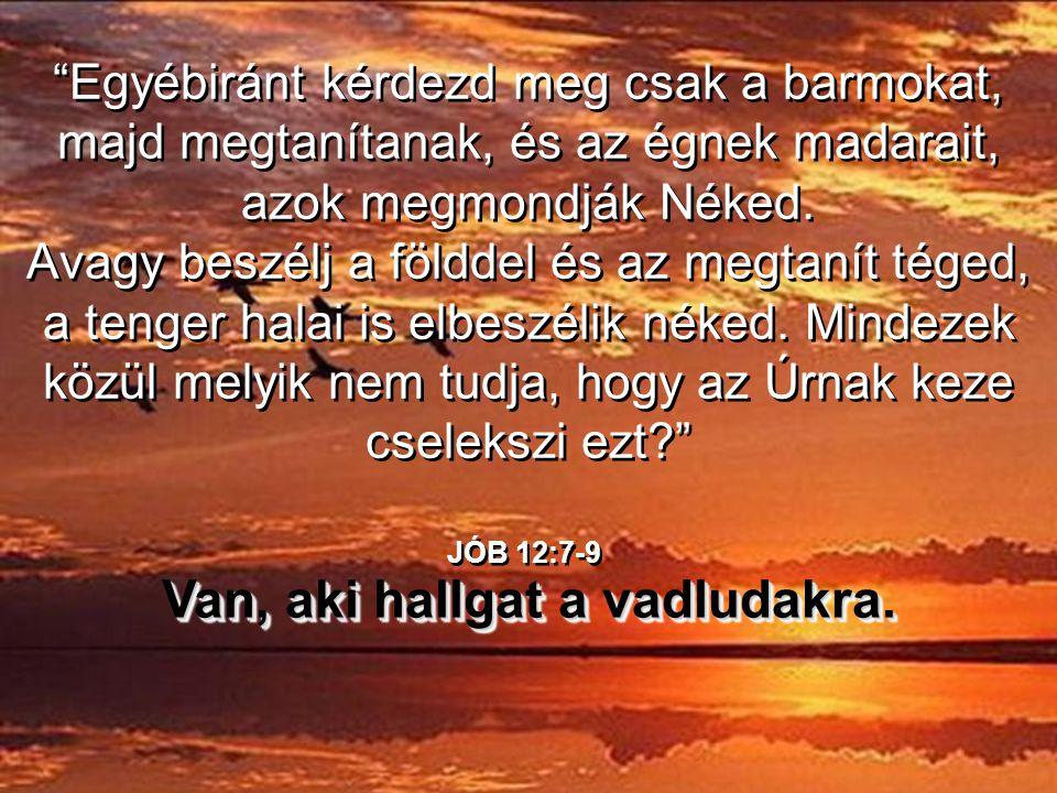 …hogy tanuljunk Isten csodálatos teremtményeitől, csak meg kell állnunk és figyelnünk elég hosszasan, hogy Isten felfedje előttünk csodáit. …hogy tanu