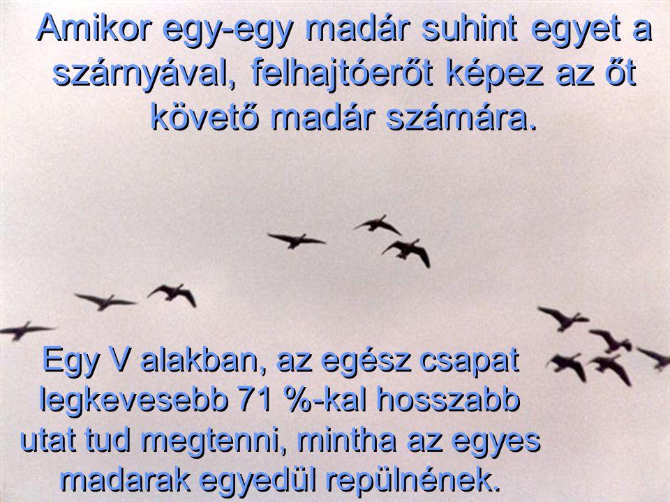 Amikor egy-egy madár suhint egyet a szárnyával, felhajtóerőt képez az őt követő madár számára.