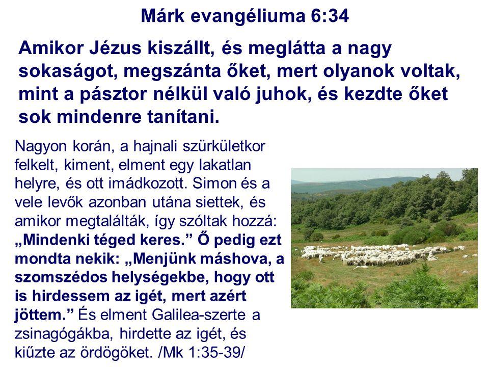 Márk evangéliuma 6:34 Amikor Jézus kiszállt, és meglátta a nagy sokaságot, megszánta őket, mert olyanok voltak, mint a pásztor nélkül való juhok, és k