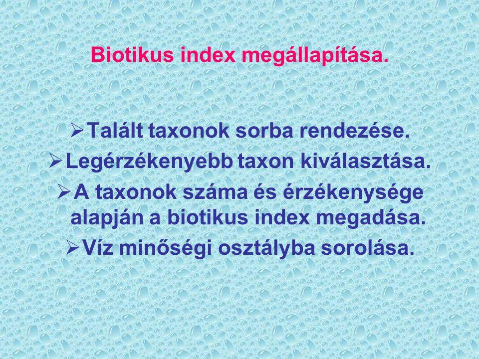 Biotikus index megállapítása. Talált taxonok sorba rendezése.