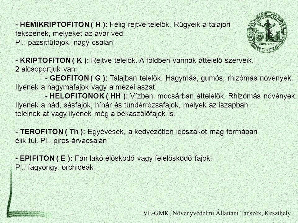 - HEMIKRIPTOFITON ( H ): Félig rejtve telelők. Rügyeik a talajon fekszenek, melyeket az avar véd. Pl.: pázsitfűfajok, nagy csalán - KRIPTOFITON ( K ):