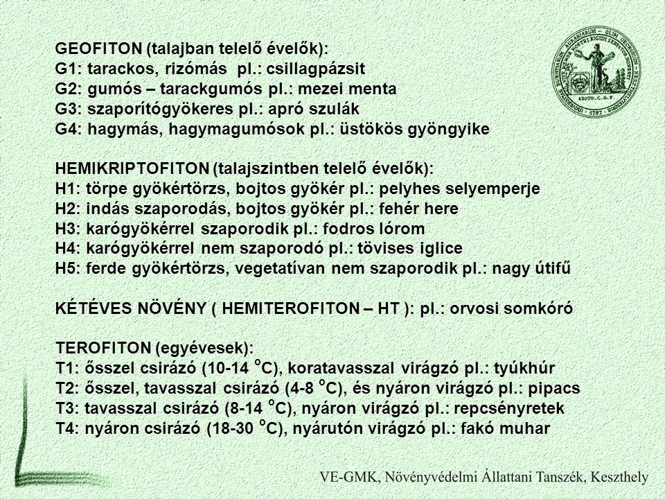 GEOFITON (talajban telelő évelők): G1: tarackos, rizómás pl.: csillagpázsit G2: gumós – tarackgumós pl.: mezei menta G3: szaporítógyökeres pl.: apró s