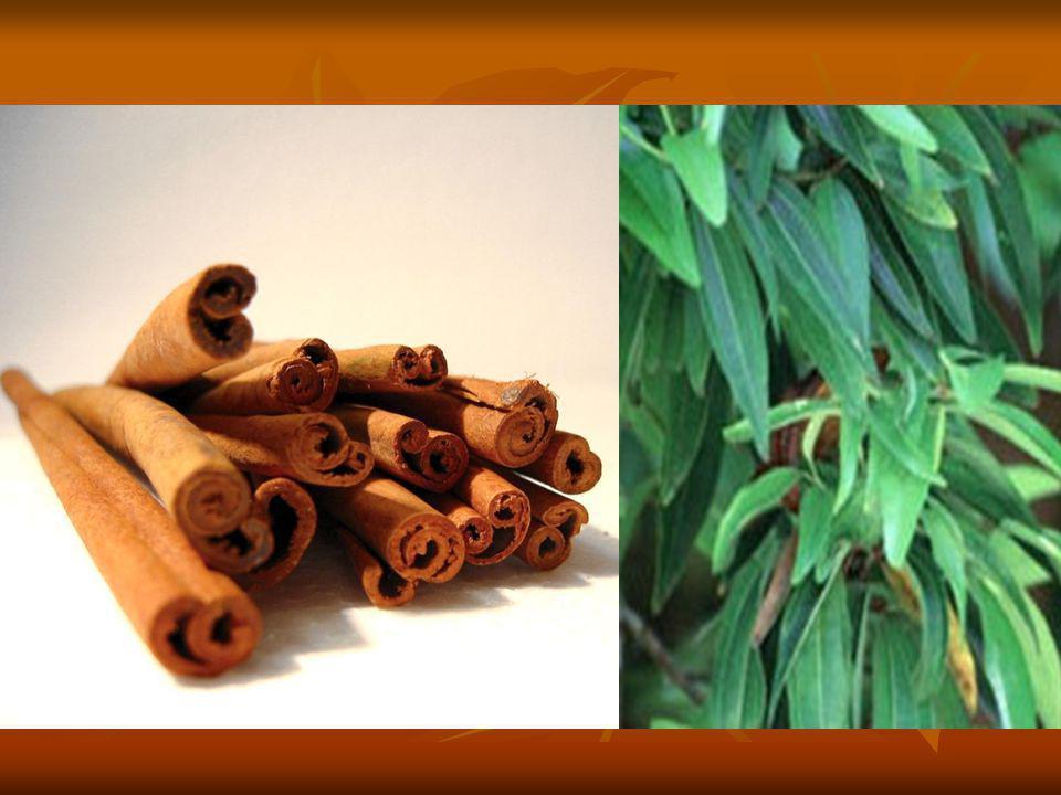 FAHÉJ JELLEMZŐI:  Mindennap használatos, illatos fűszer.