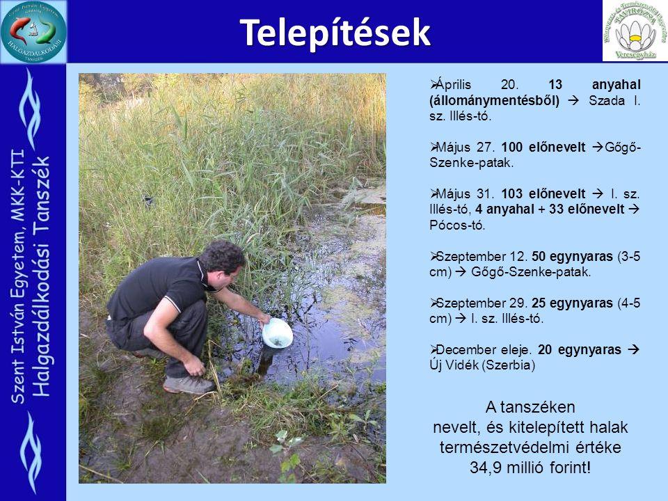 Telepítések  Április 20. 13 anyahal (állománymentésből)  Szada I. sz. Illés-tó.  Május 27. 100 előnevelt  Gőgő- Szenke-patak.  Május 31. 103 előn