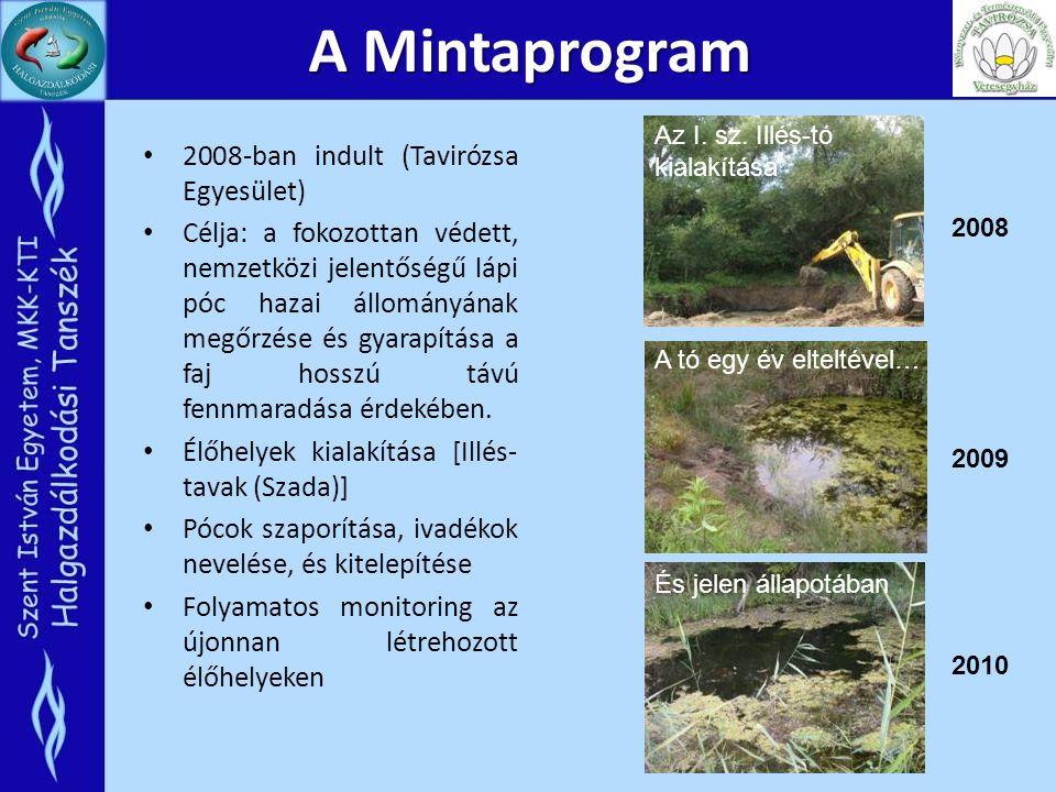A Mintaprogram 2008-ban indult (Tavirózsa Egyesület) Célja: a fokozottan védett, nemzetközi jelentőségű lápi póc hazai állományának megőrzése és gyara