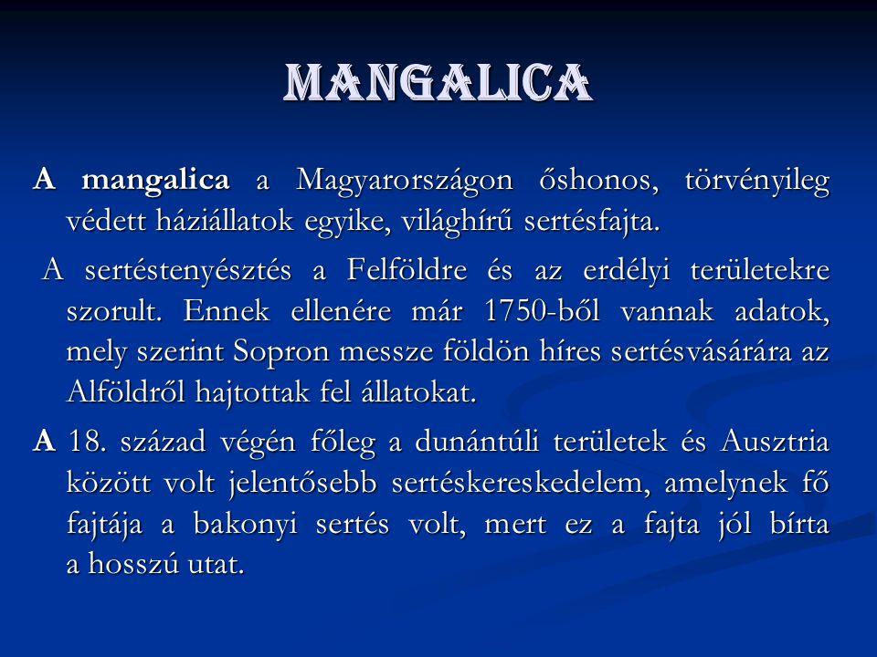 Mangalica A mangalica a Magyarországon őshonos, törvényileg védett háziállatok egyike, világhírű sertésfajta. A sertéstenyésztés a Felföldre és az erd