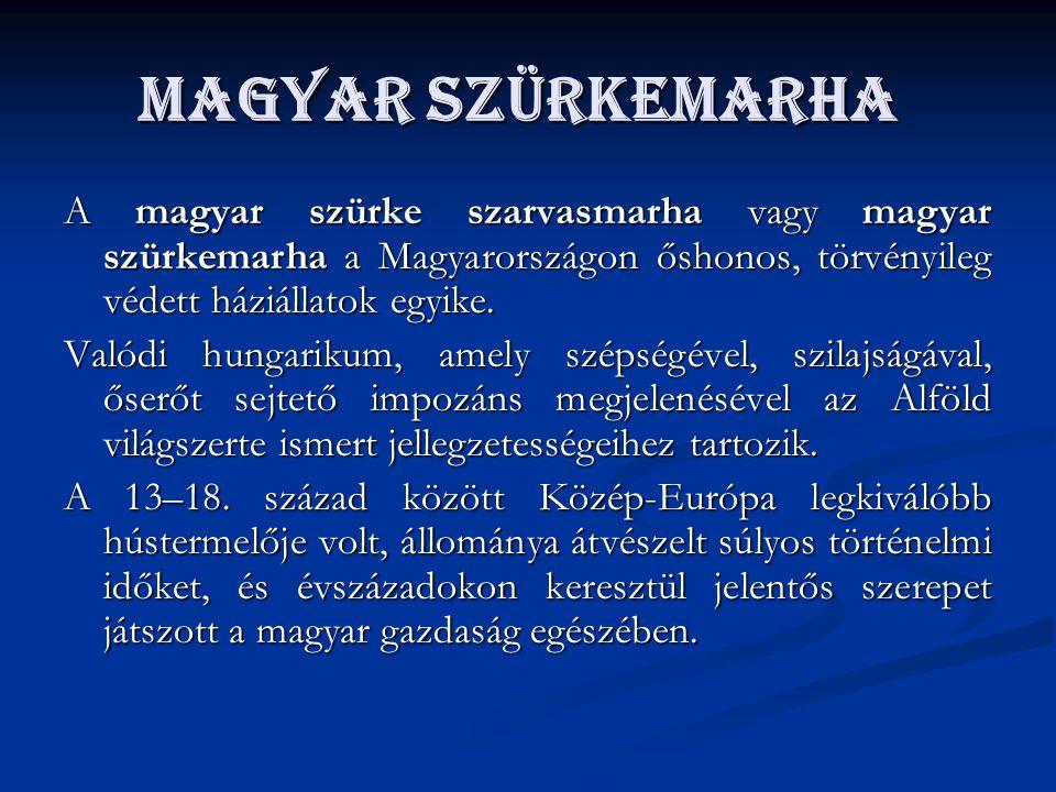 Magyar szürkemarha A magyar szürke szarvasmarha vagy magyar szürkemarha a Magyarországon őshonos, törvényileg védett háziállatok egyike. Valódi hungar