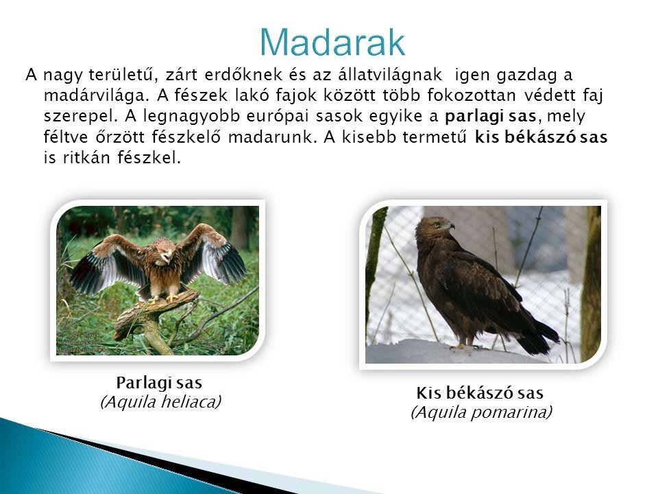 A nagy területű, zárt erdőknek és az állatvilágnak igen gazdag a madárvilága. A fészek lakó fajok között több fokozottan védett faj szerepel. A legnag