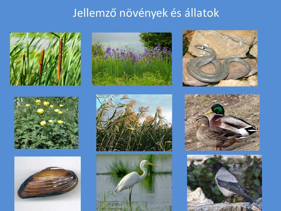 A Sió környezetvédelme A Sió környezetvédelme állandó feladat, vízcseréje, szabályozása.