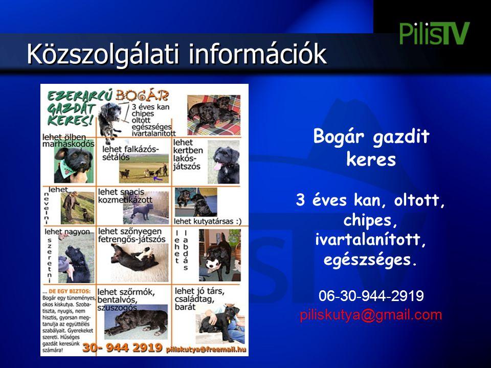 Közszolgálati információk Bogár gazdit keres 3 éves kan, oltott, chipes, ivartalanított, egészséges. 06-30-944-2919 piliskutya@gmail.com