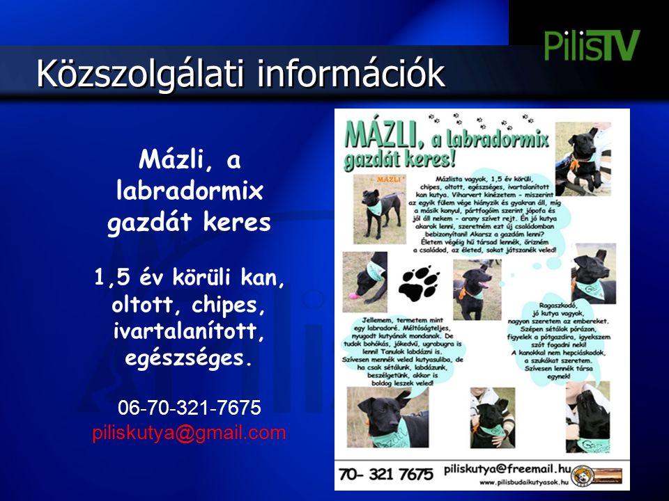 Mázli, a labradormix gazdát keres 1,5 év körüli kan, oltott, chipes, ivartalanított, egészséges. 06-70-321-7675 piliskutya@gmail.com Közszolgálati inf