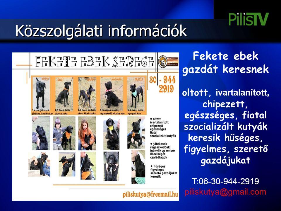 Fekete ebek gazdát keresnek oltott, ivartalanított, chipezett, egészséges, fiatal szocializált kutyák keresik hűséges, figyelmes, szerető gazdájukat T