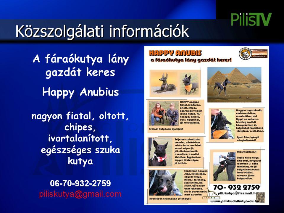 A fáraókutya lány gazdát keres Happy Anubius nagyon fiatal, oltott, chipes, ivartalanított, egészséges szuka kutya 06-70-932-2759 piliskutya@gmail.com