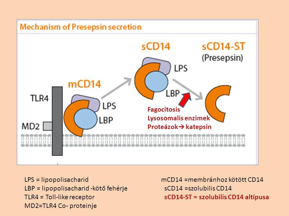 LPS = lipopolisacharid LBP = lipopolisacharid -kötő fehérje TLR4 = Toll-like receptor MD2=TLR4 Co- proteinje mCD14 =membránhoz kötött CD14 sCD14 =szolubilis CD14 sCD14-ST = szolubilis CD14 altípusa Fagocitosis Lysosomalis enzimek Proteázok→ katepsin