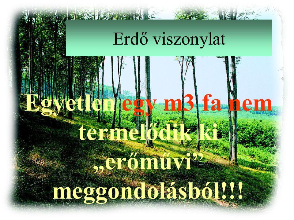 """Erdő viszonylat Egyetlen egy m3 fa nem termelődik ki """"erőművi meggondolásból!!!"""