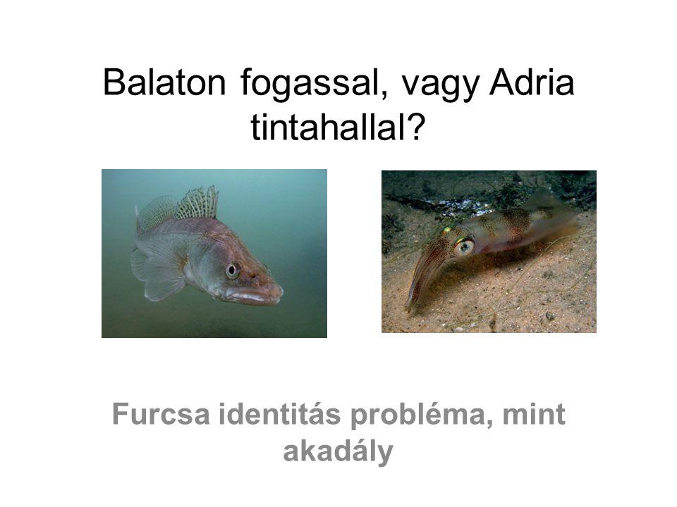 Balaton fogassal, vagy Adria tintahallal? Furcsa identitás probléma, mint akadály