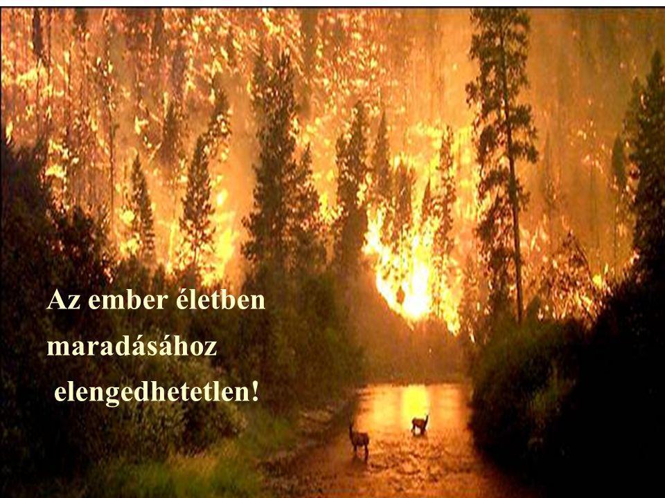 Mire tanít a tűz?
