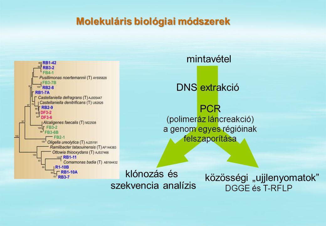 """közösségi """"ujjlenyomatok klónozás és szekvencia analízis mintavétel DNS extrakció PCR (polimeráz láncreakció) a genom egyes régióinak felszaporítása DGGE és T-RFLP Molekuláris biológiai módszerek"""