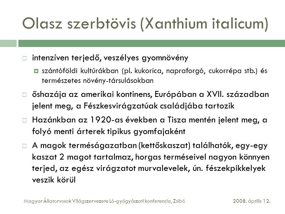 Olasz szerbtövis (Xanthium italicum)  intenzíven terjedő, veszélyes gyomnövény  szántóföldi kultúrákban (pl. kukorica, napraforgó, cukorrépa stb.) é