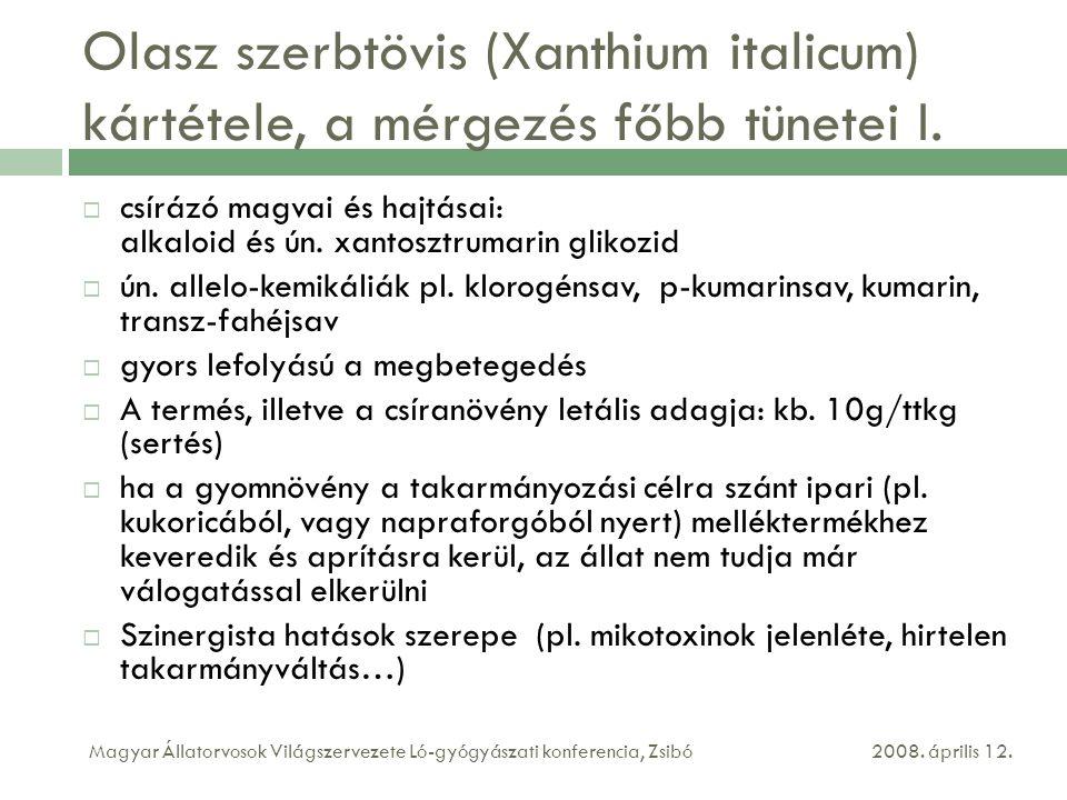 Olasz szerbtövis (Xanthium italicum) kártétele, a mérgezés főbb tünetei I.  csírázó magvai és hajtásai: alkaloid és ún. xantosztrumarin glikozid  ún