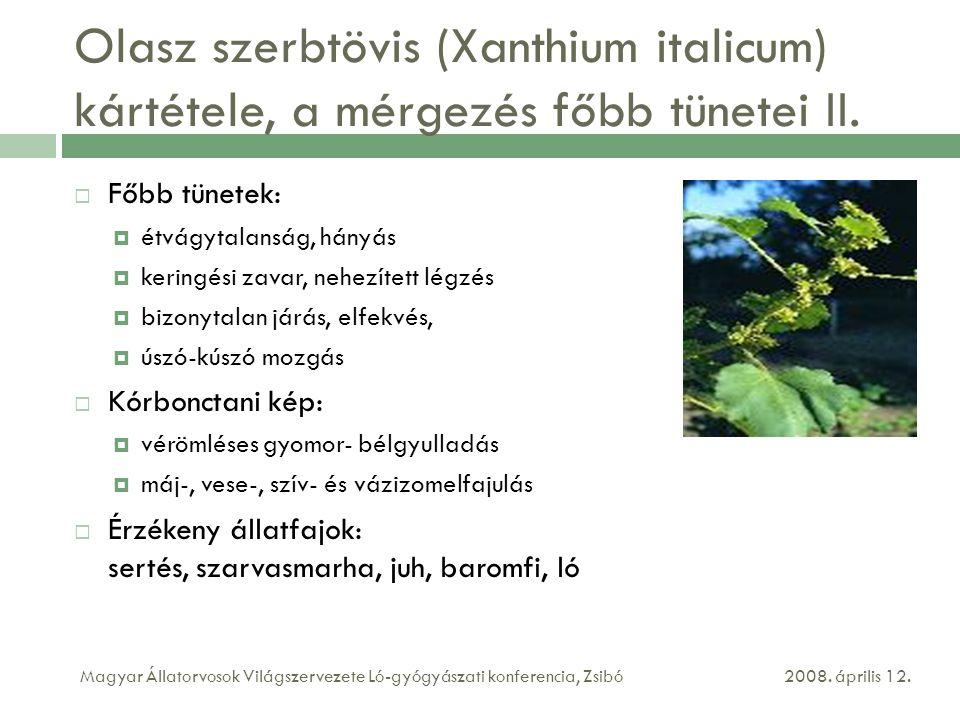 Olasz szerbtövis (Xanthium italicum) kártétele, a mérgezés főbb tünetei II.  Főbb tünetek:  étvágytalanság, hányás  keringési zavar, nehezített lég