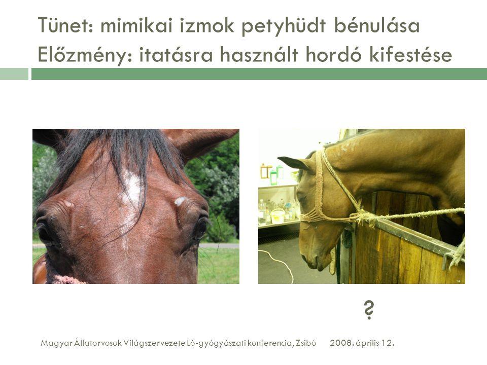 Tünet: mimikai izmok petyhüdt bénulása Előzmény: itatásra használt hordó kifestése 2008. április 12.Magyar Állatorvosok Világszervezete Ló-gyógyászati
