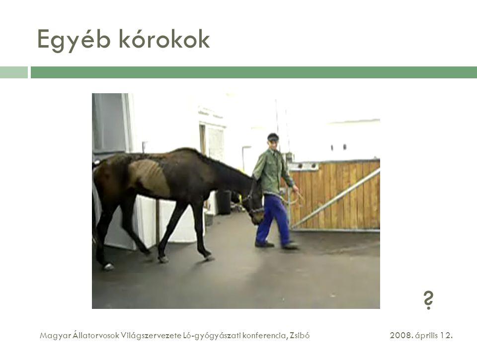 Egyéb kórokok 2008. április 12.Magyar Állatorvosok Világszervezete Ló-gyógyászati konferencia, Zsibó ?