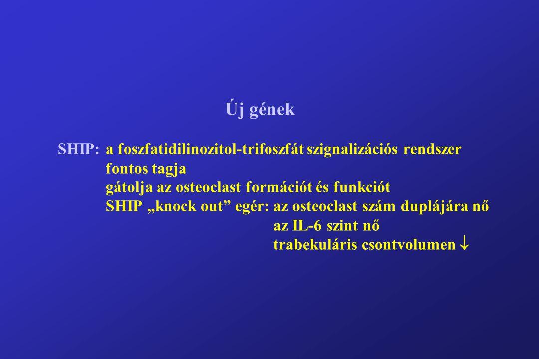 """Új gének SHIP:a foszfatidilinozitol-trifoszfát szignalizációs rendszer fontos tagja gátolja az osteoclast formációt és funkciót SHIP """"knock out egér: az osteoclast szám duplájára nő az IL-6 szint nő trabekuláris csontvolumen """
