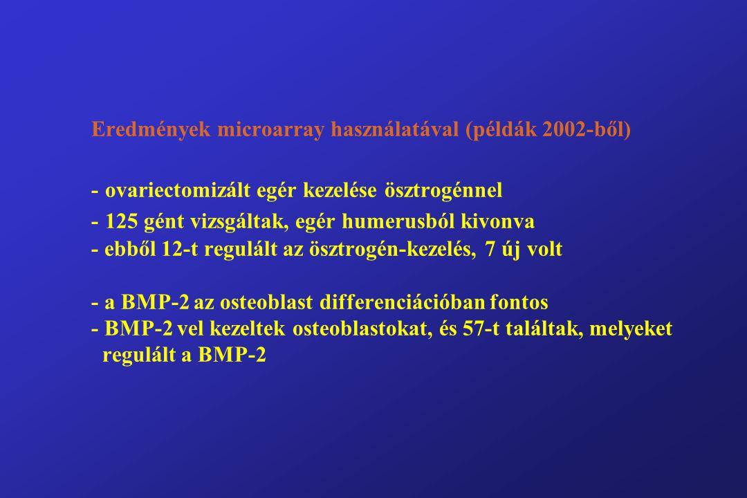 Eredmények microarray használatával (példák 2002-ből) - ovariectomizált egér kezelése ösztrogénnel - 125 gént vizsgáltak, egér humerusból kivonva - ebből 12-t regulált az ösztrogén-kezelés, 7 új volt - a BMP-2 az osteoblast differenciációban fontos - BMP-2 vel kezeltek osteoblastokat, és 57-t találtak, melyeket regulált a BMP-2