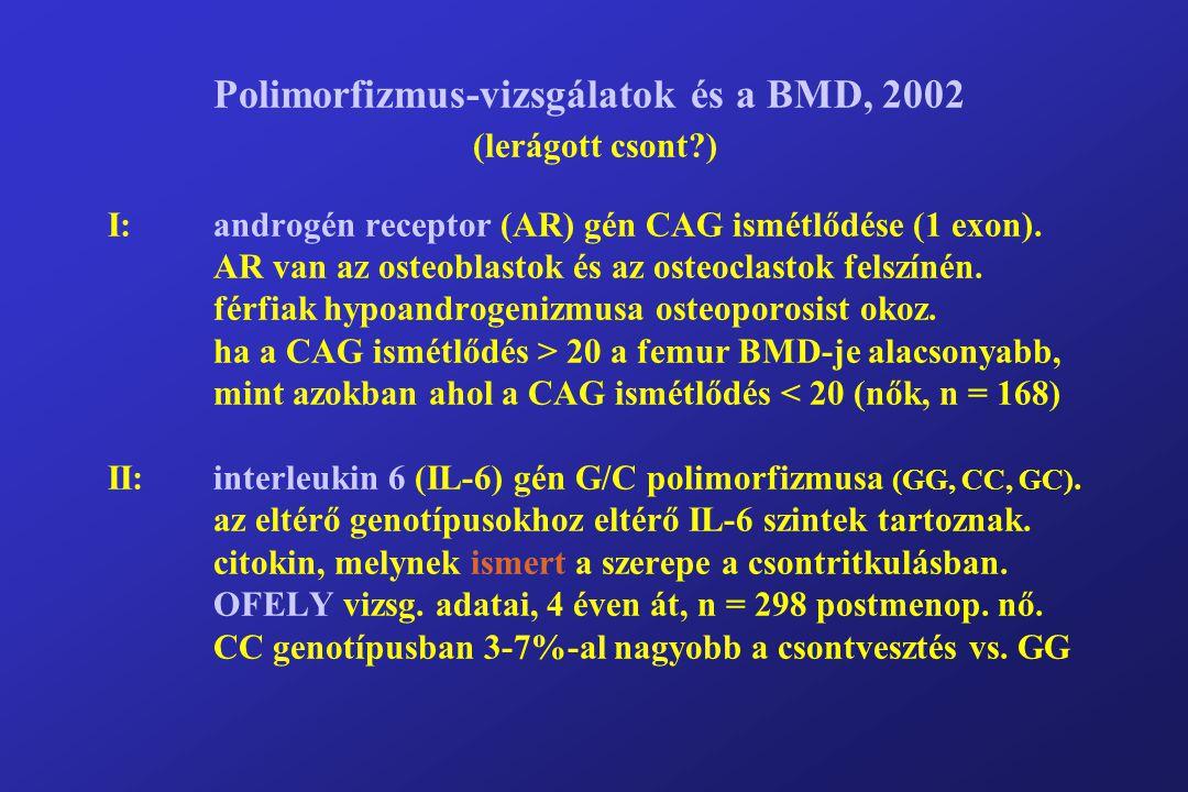 Polimorfizmus-vizsgálatok és a BMD, 2002 (lerágott csont?) I:androgén receptor (AR) gén CAG ismétlődése (1 exon).