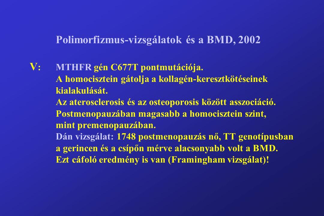 Polimorfizmus-vizsgálatok és a BMD, 2002 V :MTHFR gén C677T pontmutációja.
