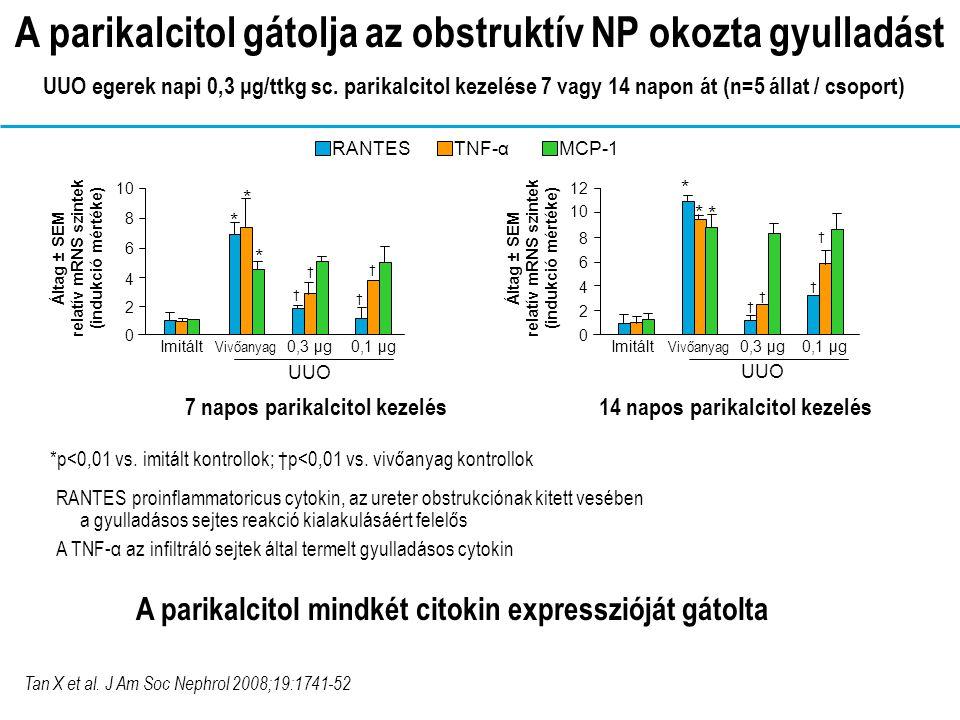 RANTES proinflammatoricus cytokin, az ureter obstrukciónak kitett vesében a gyulladásos sejtes reakció kialakulásáért felelős A TNF-α az infiltráló sejtek által termelt gyulladásos cytokin 14 napos parikalcitol kezelés7 napos parikalcitol kezelés Tan X et al.