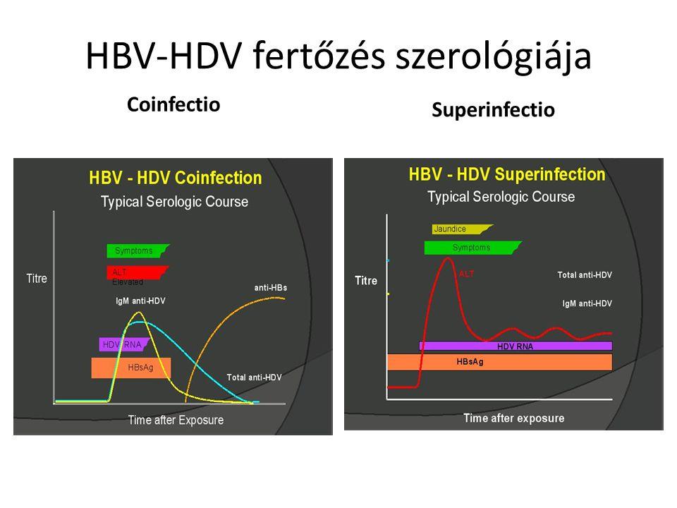 HBV-HDV fertőzés szerológiája Coinfectio Superinfectio